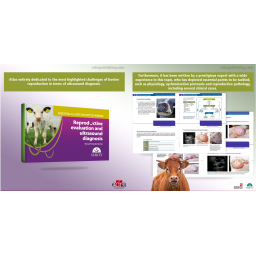Reproductive Evaluation and Ultrasound Diagnosis. Essential Guides on Cattle Farming