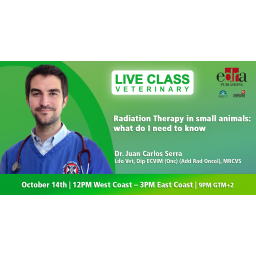 Radiation Therapy in small...