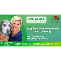 Staging canine lymphoma: what and why - veterinary webinar - veterinary class - veterinary continuing education