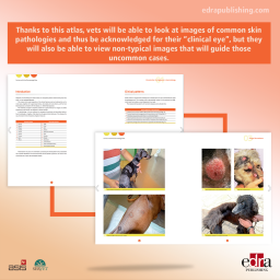 Canine and Feline Dermatology Atlas - book extract 2 - veterinary book